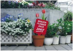 FLOWER_JACK.jpg